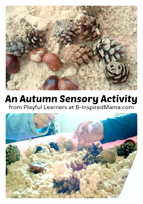A Simple Autumn Sensory Activity at B-Inspired Mama