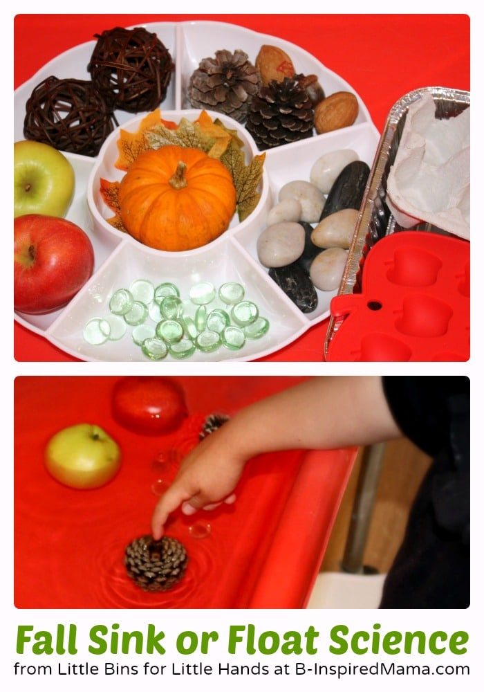 Fall Sink or Float Preschool Science Activity at B-Inspired Mama