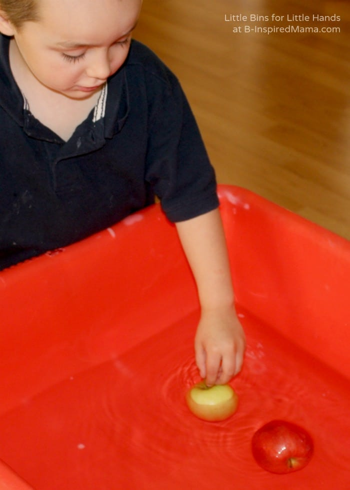 Floating Apples in a Fall Preschool Science Activity at B-Inspired Mama