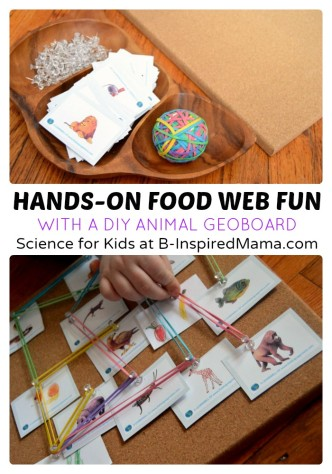A Hands on Food Web Board - Science for Kids at B-Inspired Mama