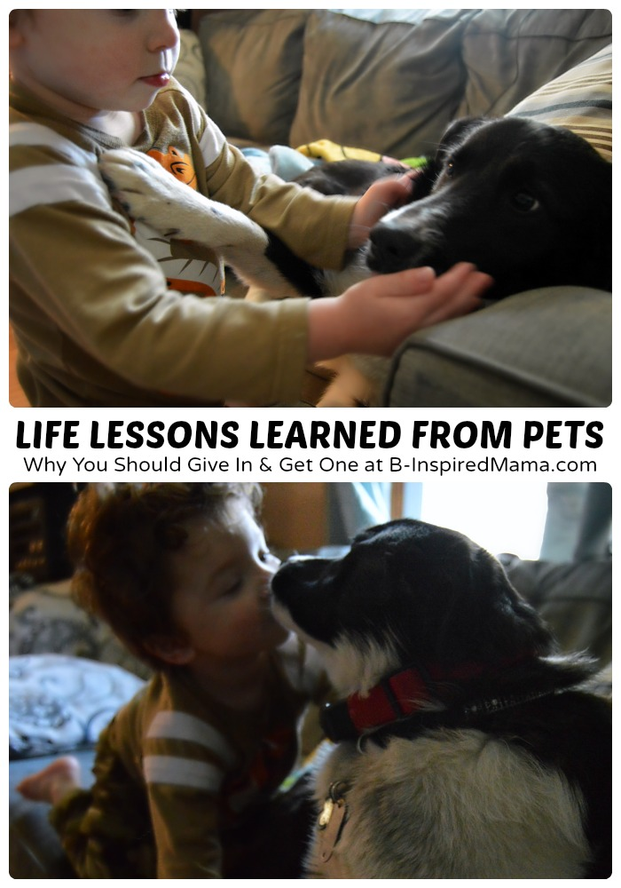 Life Lessons for Kids from their Pets [#sponsored #SwifferEffect] at B-Inspired Mama