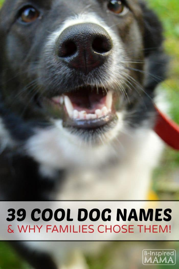 39 Dog Names and Why Families Picked Them - at B-Inspired Mama