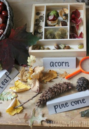Autumn Exploration Nature Table