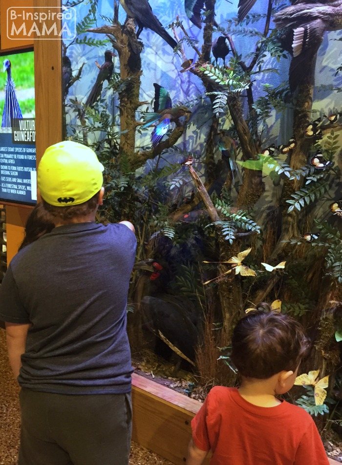 Our Kalahari Indoor Water Park Adventure - Checking Out the African Animals - at B-Inspired Mama