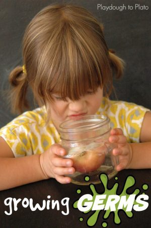 Growing Germs Science Experiment