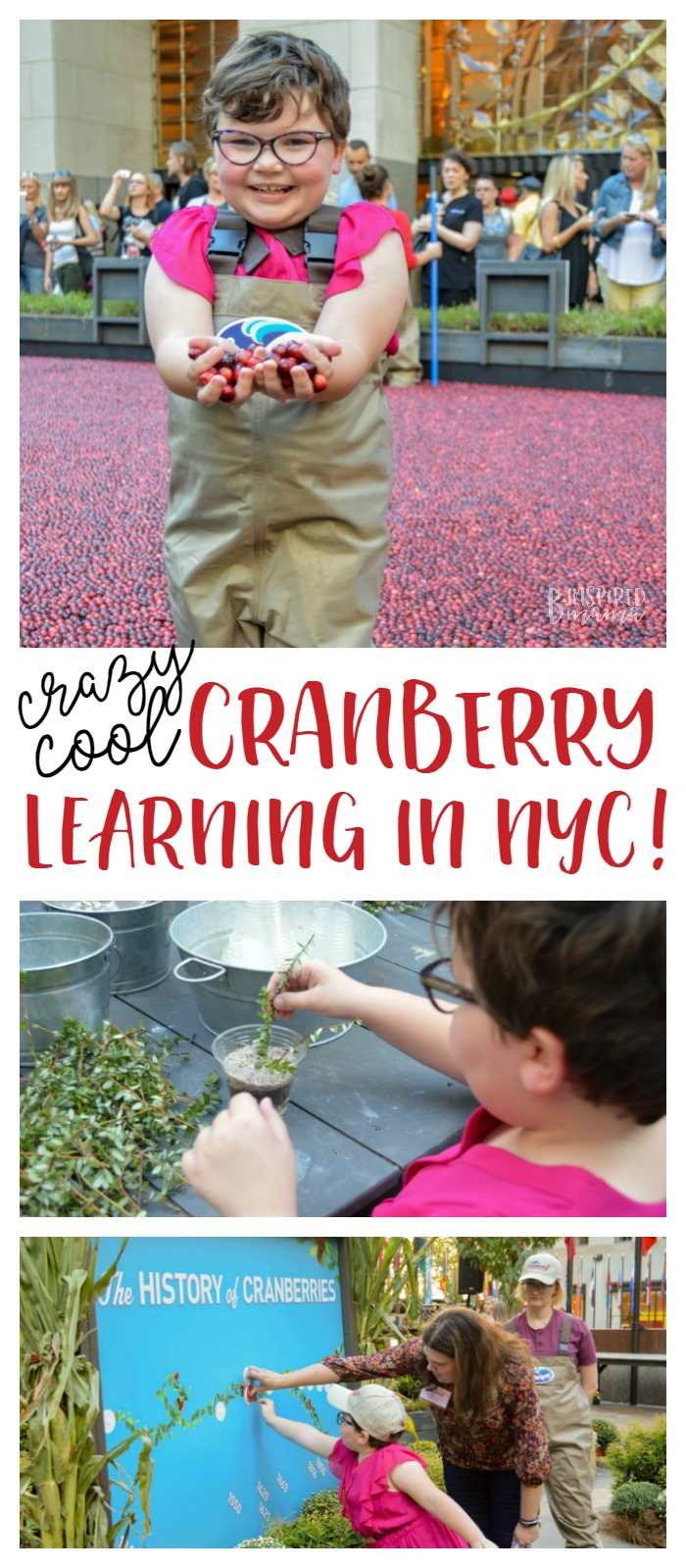 Check out all of our crazy-fun hands-on cranberry learning at Ocean Spray's #CranberryClassroom in NYC + learn how to make Orange Cranberry muffins, too! - #cranberries #recipe #yum #fall #learning #kids #kbn #binspiredmama