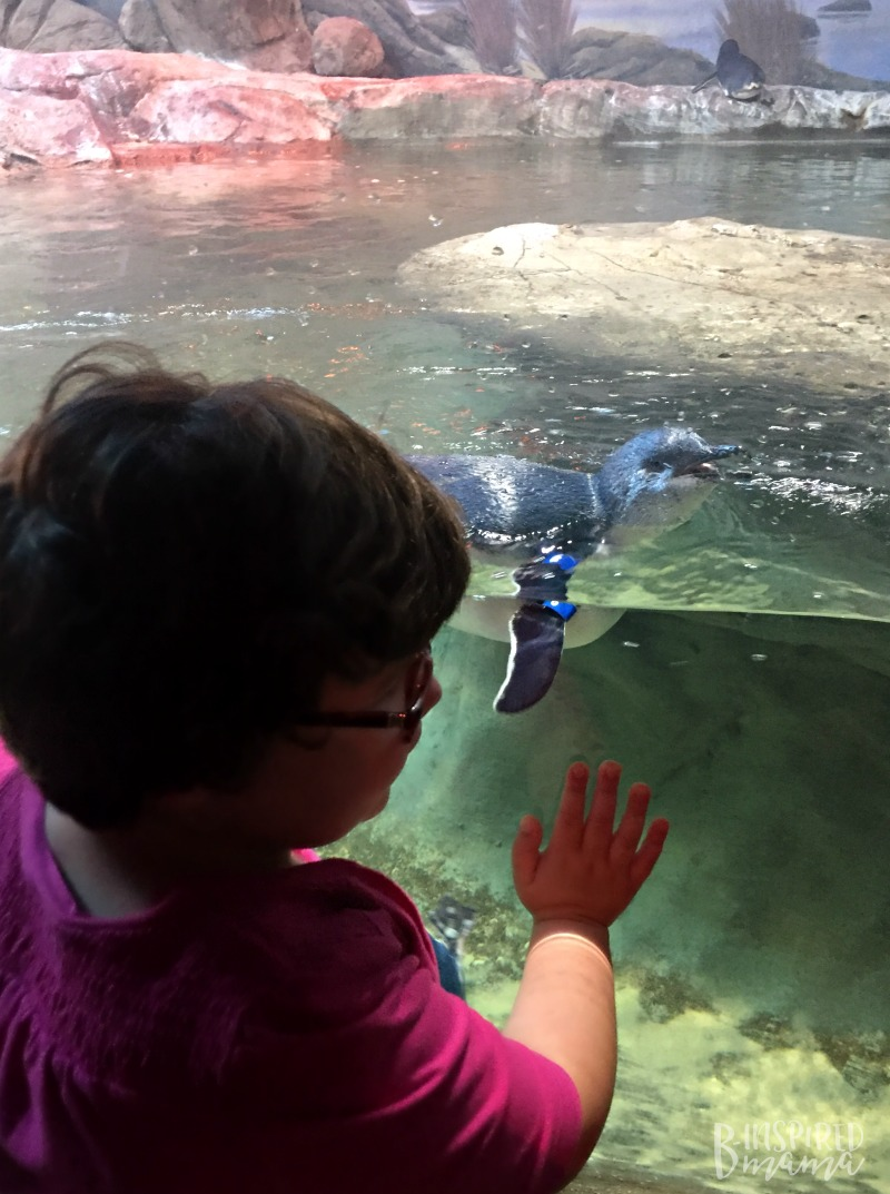 Miss P getting up close with a Blue Penguin at Adventure Aquarium