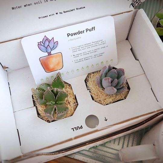 Monthly Succulent Subscription Box for Mom